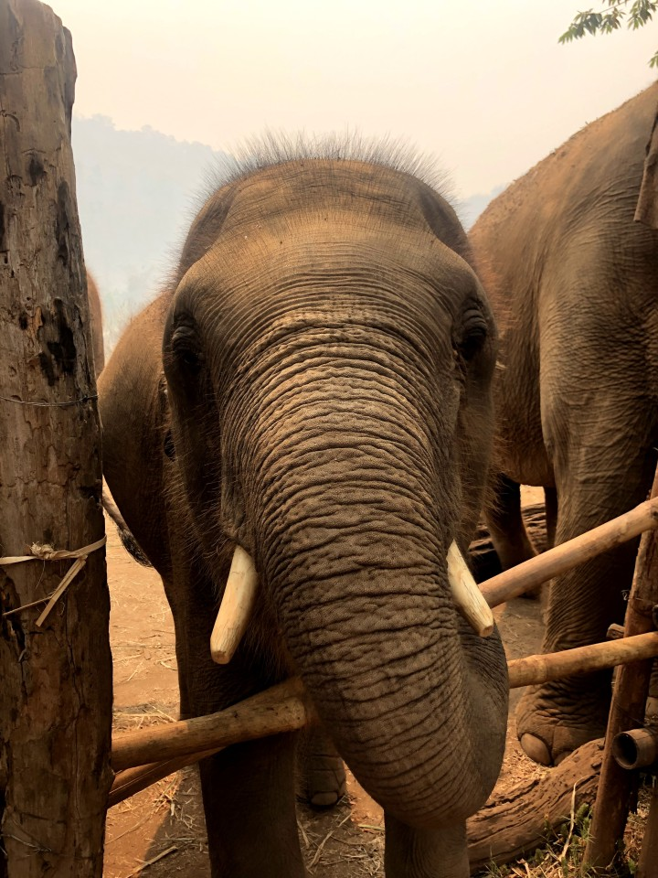 Are elephant sanctuaries ethical?